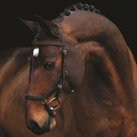 Rambo Micklem Original competitie Bridle